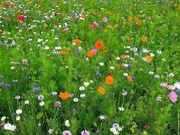 Journée biodiversité fonctionnelle – 13 oct. 2016 – Avignon (84) | Veille Scientifique Agroalimentaire - Agronomie | Scoop.it