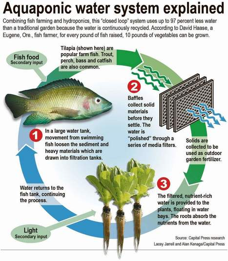 Closed loop grows crops, fish - Capital Press | Aquaponics~Aquaculture~Fish~Food | Scoop.it