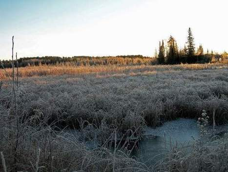 Pat Durkin column: Wetlands mitigation's end result isn't what Welch advertises | Nature + Economics | Scoop.it