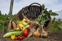 Agricultural and Biofuel News: Organic Farming Expands, Contributes to Sustainable Food Security | A Scoop At Ecological Issues | Scoop.it
