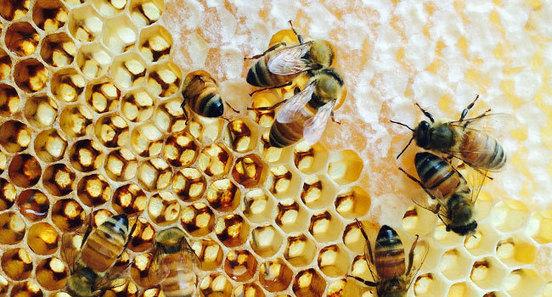5 conseils pour vous lancer dans l apicul for Salon apiculture