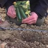 Jardinage : conseils pratiques