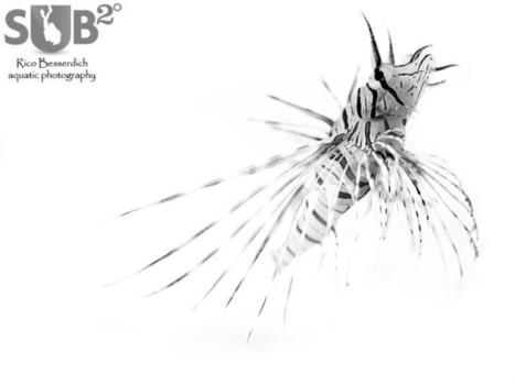 Black and White Underwater Photography   All about water, the oceans, environmental issues   Scoop.it