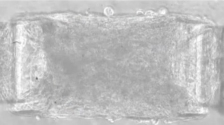 """Light-activated skeletal muscle """"blurs the boundary between nature and machines"""" 