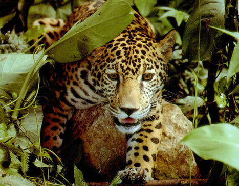 46 Amazing Amazon Forest & Amazon River Photos | Incredible Snaps | Cultural News, Trends & Opinions | Scoop.it