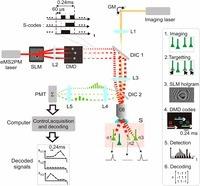 Encoded multisite two-photon microscopy | Neuroscience_technics | Scoop.it