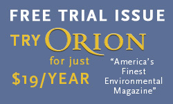 Democracy and Community   Rebecca Solnit   Orion Magazine   Democracy in Place and Space   Scoop.it