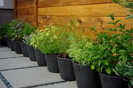 6 ways to grow edibles in small places | Gardening Inspiration and Information | Scoop.it