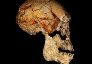 A third species of humans coexisted with Homo erectus and Homo habilis 2 million years ago   Amazing Science   Scoop.it
