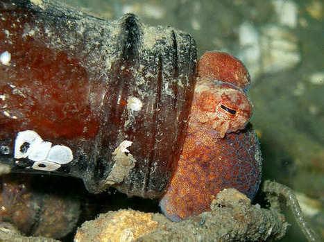 6 animales que utilizan el reciclaje como forma de vida | Reflejos | Scoop.it