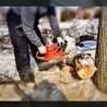 24 Hour Emergency Tree Removal Toronto (647)931-1519