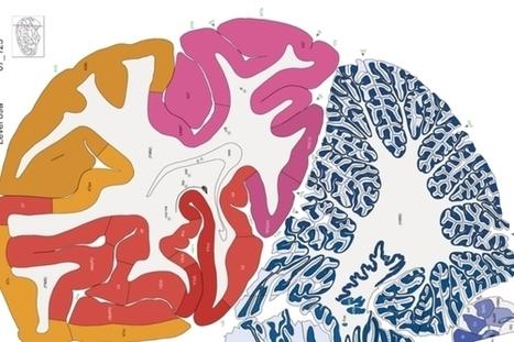 Human Brain Map Gets a Bold New Update | Neuro-Immune Regulatory Pathways | Scoop.it