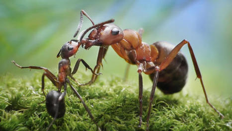 Ditch Time-Wasting Meetings By Turning Your Office Into An Ant Colony | From Complexity to Wisdom | Scoop.it