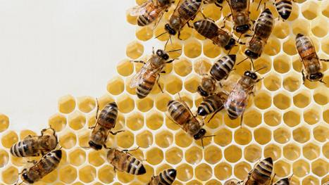 La Russie avertit Obama: une guerre globale sur la disparition des abeilles menace | Touche pas ma planète ! | Scoop.it