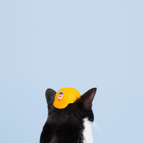 Princess Cheeto, les portraits de chat colorés d'Hugo Martinez | Graine de Photographe The Blog | Photo 2.0 | Scoop.it