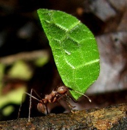 Bugs to biofuels | All About Ants | Scoop.it