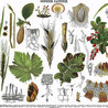 Jardissimo - Jardinage facile et généreux