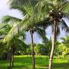 Veille tourisme durable