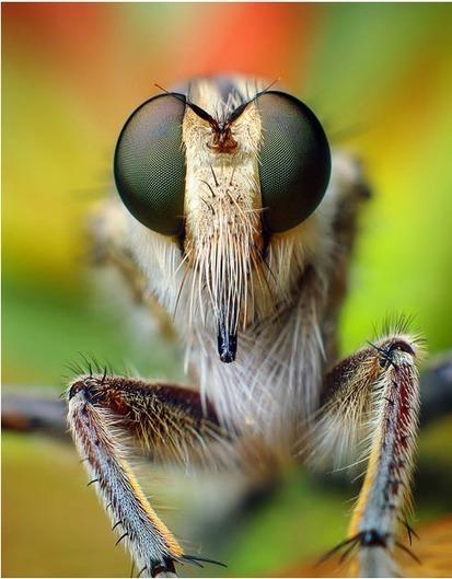 Fotografías macro de los ojos de los insectos por: Thomas Shahan | Bichos en Clase | Scoop.it