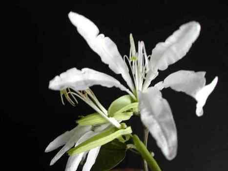Plantas nativas del Uruguay | Botánica | Scoop.it