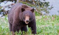 Portfolio | Nicolas Dory | Nature and Wildlife photography | Photos | Scoop.it