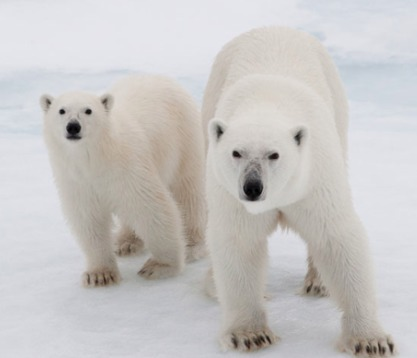 Save the Arctic | Romy Beat - Writer&Screenwriter | Scoop.it