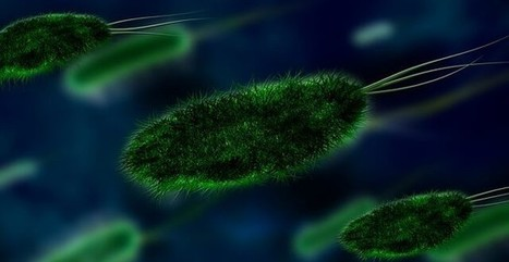 Faktor Resiko & Kondisi yang Memicu Meningitis | Kolom Sehat - Tips Kesehatan Harian | Scoop.it