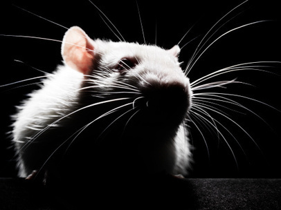 Your Team Can Smell a Rat | Leadership in higher education | Scoop.it