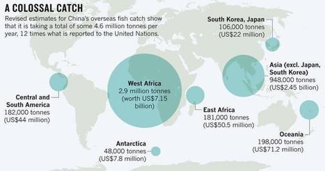 @Seasaver: Infographic: #China's overseas #fishCatch is 12 x more than reported... | Rescue our Ocean's & it's species from Man's Pollution! | Scoop.it