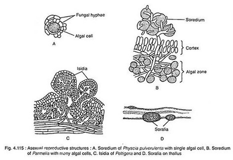 Classification of fungi alexopoulos and mims 19 classification of fungi alexopoulos and mims 1979 pdf download fandeluxe