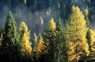 La biodiversità delle foreste aumenta la produzione legnosa / Comunicati Stampa / Ufficio stampa / Comunicazione / Home - Fondazione Edmund Mach di San Michele all'Adige | Fondazione Mach | Scoop.it