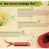WHAT KIND OF  Original Garcinia Cambogia