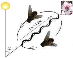 Understanding the waggle of bee babble - The Journal News | LoHud.com | Bees and Honey | Scoop.it