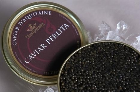 La France est devenue le deuxième producteur de caviar de la planète | Innovation et sérendipité | Scoop.it