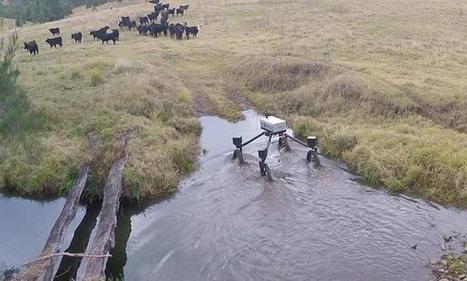 SwagBot to Herd Cattle on Australian Ranches | Robotic applications | Scoop.it