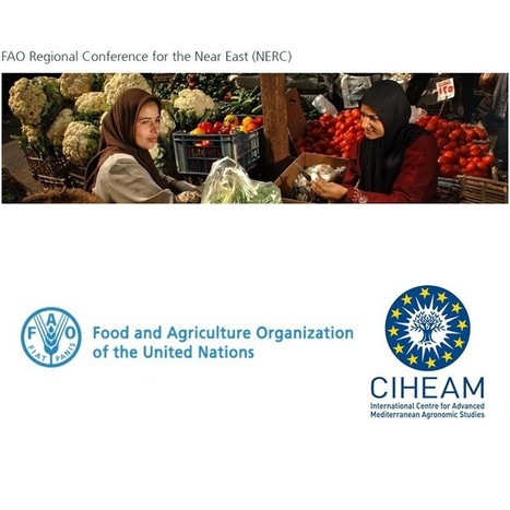 FAO/CIHEAM Side Event on sustainable food consumption and production in the Mediterranean region - Rome, May 11th 2016 | FTN Mediterranean Agriculture & Fisheries | Scoop.it
