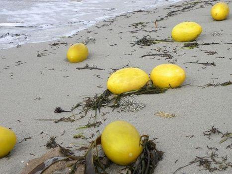 Tempête.  Grand bazar sur les plages bretonnes   Toxique, soyons vigilant !   Scoop.it