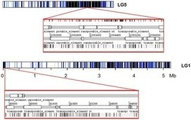Characterization of Transposable Elements in the Ectomycorrhizal Fungus Laccaria bicolor | Mycorrhizal fungal genomes | Scoop.it