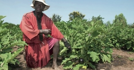 Au Sénégal, la production de fruits et légumes a le vent en poupe - JeuneAfrique.com | Fruits & légumes à l'international | Scoop.it