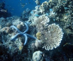 Australia chooses coal ports over coral reef   MINING.com   Sustain Our Earth   Scoop.it