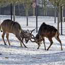 Europe's cold close zoo outside Paris | e-Expeditions | Scoop.it