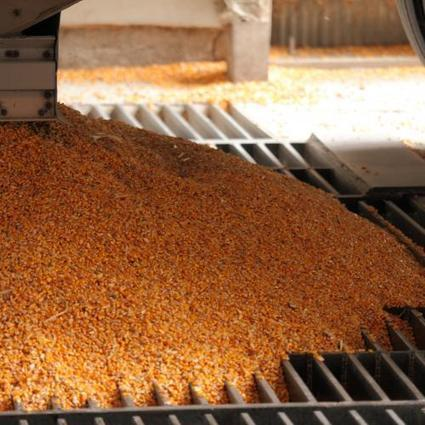 Corn, Soybean, Wheat Price Projections for 2017-18 Marketing Year | CIHEAM Press Review | Scoop.it