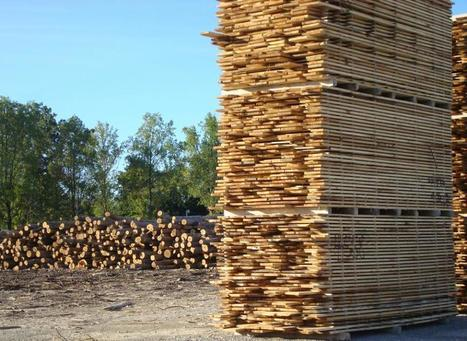 Global timber market prices continue to decline   Timberland Investment   Scoop.it