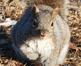 Home | Project Squirrel | Forty Two: Life and Other Important Things | Scoop.it