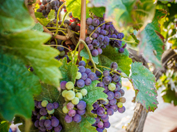 Best Destinations In Europe For Wine Lovers | TRAVEL KEVELAIR | Scoop.it