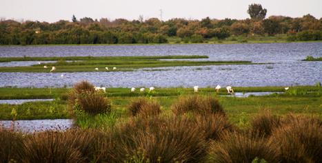 Marismas de Doñana - Actualidad Medio Ambiente | Actualidad forestal cerca de ti | Scoop.it