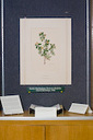 Michigan State University Libraries - Vibrant Treasures - Joseph Banks Florilegium | Pre-Modern Africa, the Middle East - and Beyond | Scoop.it