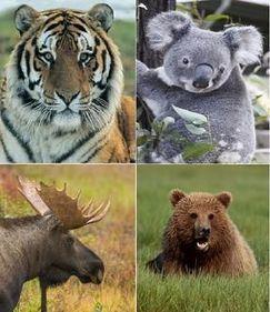 Image Gallery temperate animals
