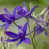 Fleurs et plantes sauvages