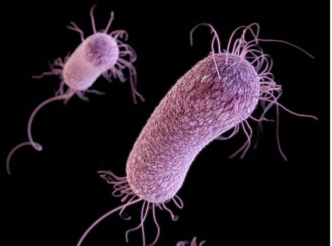 Bacteria Send Electrical Pulses as Recruitment Ads | Media Cultures: Microbiology in the news | Scoop.it